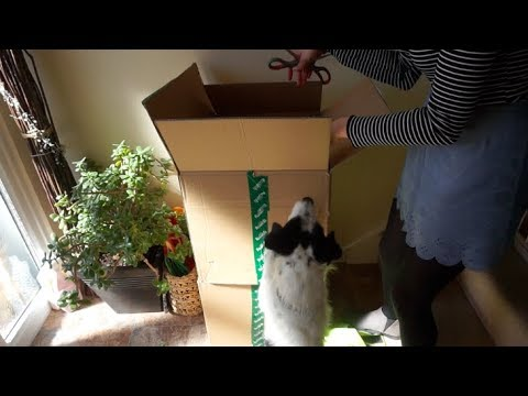 Unboxing Mystery Pet Packages!