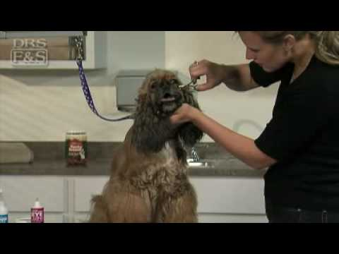 How to Clean Your Dog's Eyes (DrsFosterSmith)
