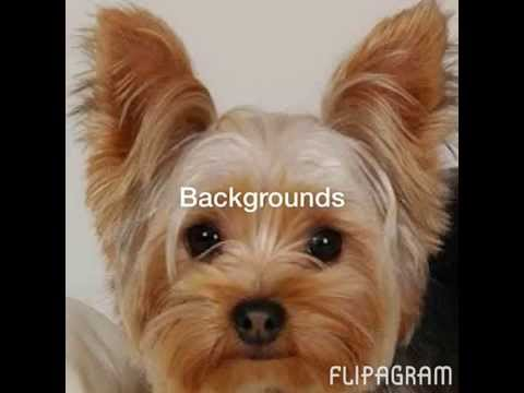 Backgrounds of very cute puppies in a flipagram