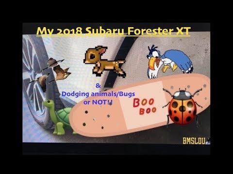 My 2018 Subaru Forester XT : Birds/Bugs/Deer/Turtles/Geese.....OH MY!!