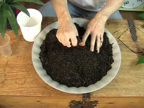 Indoor Soil and Plant Feeding