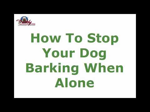 How to Stop Your Dog Barking When Alone | Top Tips
