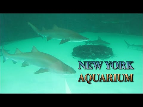 A Tour Around The NY Aquarium At Coney Island - HD