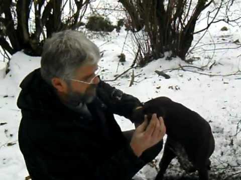 Truffle hunting january 2012 Greece