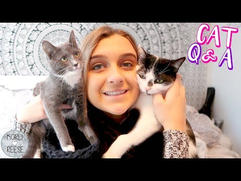 Q & A ~ ALL ABOUT MY KITTIES!