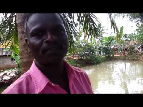 Fish pond-  I I ,A  part of Integrated Farming
