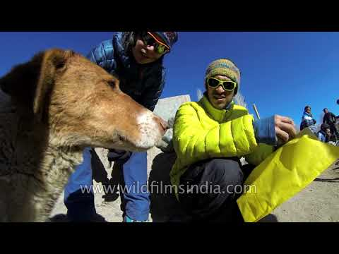 Feeding a friendly and hungry pooch in the high Himalaya