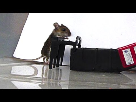 Best Low Cost Humane Mouse Trap