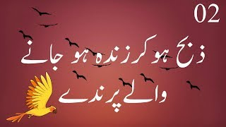 Parinday | Aesy Parinday jo Zibah ho kar phir zinda ho gay | History of Islam | Islamic Waqia