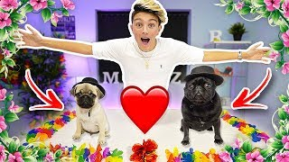 MY DOGS ACTUALLY GOT MARRIED... (emotional)