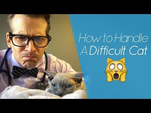 Difficult Cat? Try The Burrito Technique