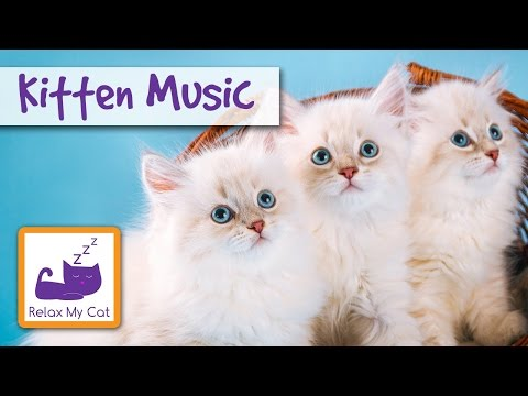 Kitten Music - Sleep Music for Kittens to Help them Relax and Chill Out