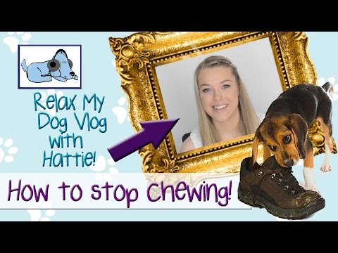 How To Stop Your Dog Chewing Things 🐶 #TRAINVLOG02