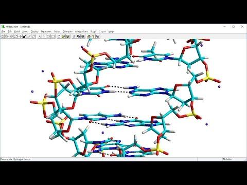 Build dsDNA with Hyperchem