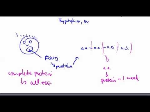 Amino Acids 11:  Essential Amino Acids
