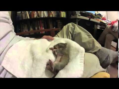 Too cute! Baby squirrel twitches in its sleep