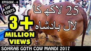 COW MANDI SOHRAB GOTH 2017 | VIP TENTS | Episode 4 | Video in URDU/HINDI