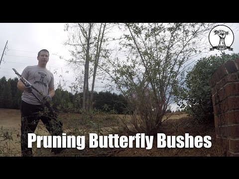 How To: Prune Butterfly Bushes