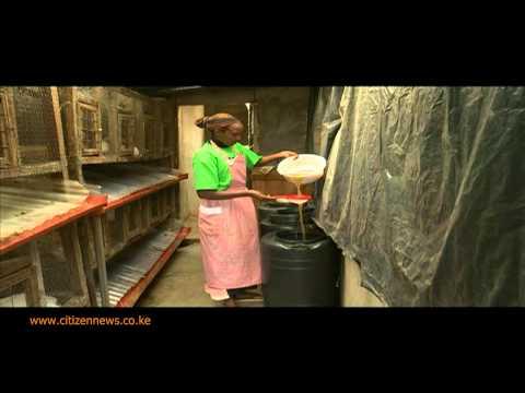 Smart Farm: Rabbit Urine