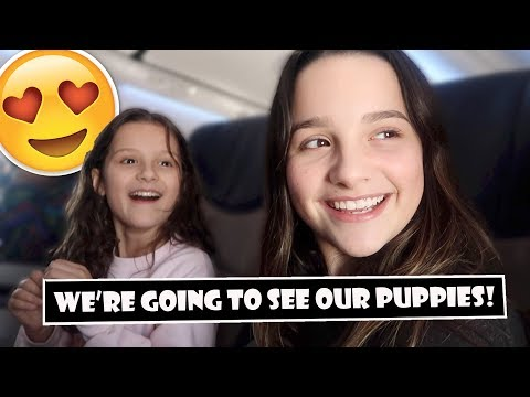 We're Going To See Our Puppies! 😍 (WK 381.6)   Bratayley