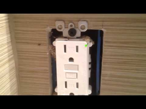 Ants in electrical outlet