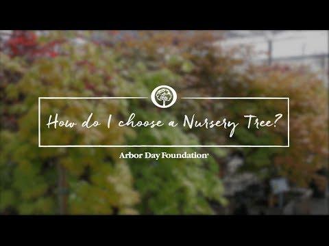 Ask an Arborist: How do I Choose a Nursery Tree?