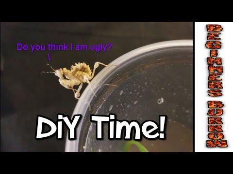 DiY Mantis Enclosure/ Bonus New T Rehousing  - Beginnners Burrow