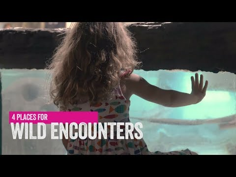 Florida Travel: 4 Places for Wild Encounters