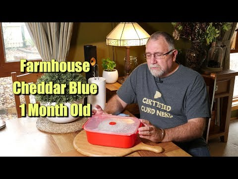 Farmhouse Cheddar Blue Update - 1 Month Old
