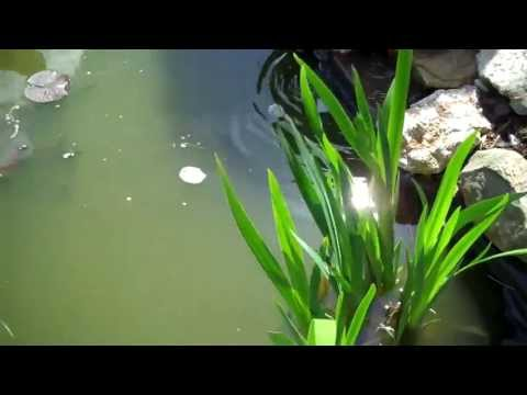 Pond Waterchange Maintenance