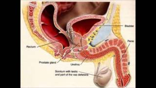 How To Get Rid Of A Uti Home Remedies For Uti Urinary Tract Infection