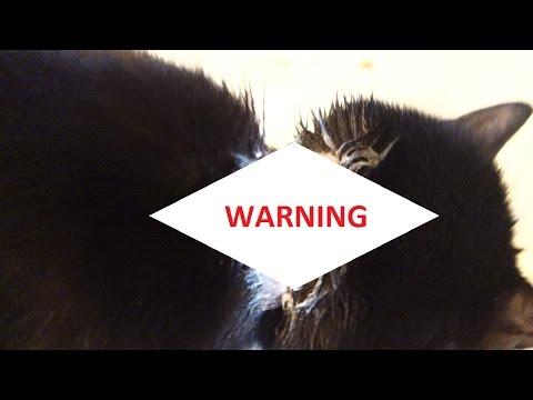 FLEA COLLAR BURNED MY CAT! WARNING