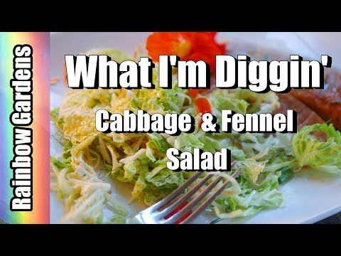 What I'm Diggin' - Harvest Savoy Cabbage, Fennel, Carrots, & More for Fennel & Cabbage Salad Recipe
