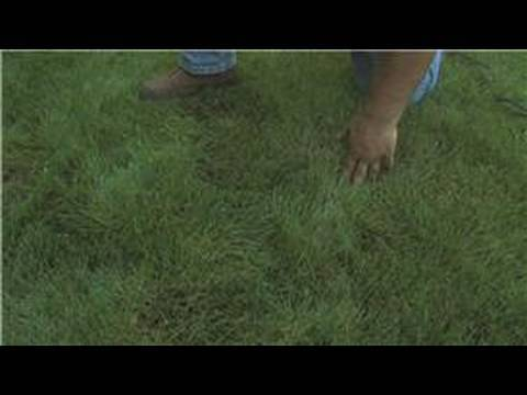 Lawn Care : How to Make Grass Grow Fast