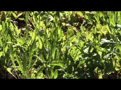 When Do I Start My Vegetable & Herb Garden?