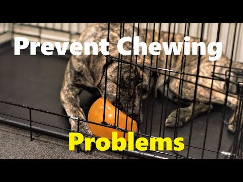 Toy you can STOP Dog destructive Chewing behavior