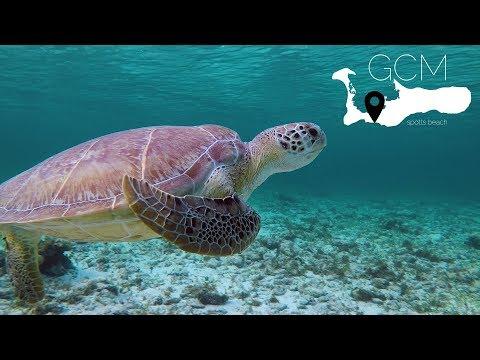Swim with Sea Turtles in Grand Cayman | Spotts Beach