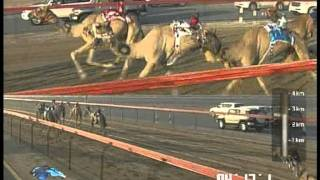 DUBAI CAMEL RACING ( Oct 18 2011 )