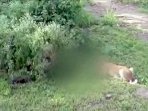 Dogs chew abandoned newborn girl's body outside Maharashtra hospital