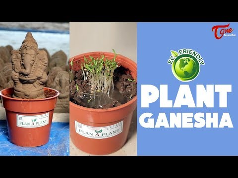 Eco Friendly Plant Ganesha Idols