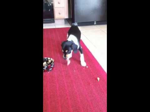 Lucy gets prescription wet dog food