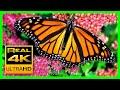 The Best Relaxing Garden In 4K Butterflies Birds And Flowers 2 Hours 4K UHD Screensaver mp3