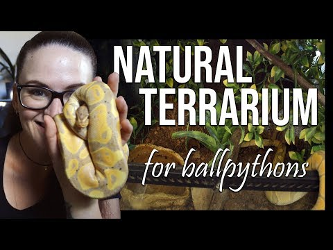 NATURAL LOOKING TERRARIUM (For ball pythons)