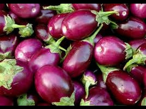 174-How to grow Brinjal /BENGAN/PATHA/EGGPLANT 🍆 & CHERRY TOMATOES (Hindi /Urdu) 18/10/16