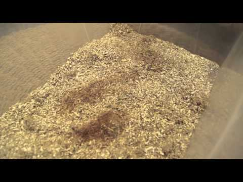DIY Your Own Hamster Cage