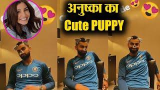Anushka Sharma put a doggy filter on husband Virat Kohli face, Watch Funny Video | FilmiBeat
