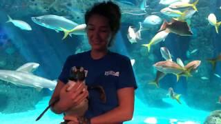 SEA-SPAN Episode 5: Penguins Waddle Through the Aquarium