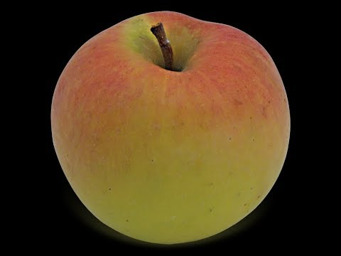 THE APPLE GAME -  NAME THIS APPLE -  TRIVIA gameshow