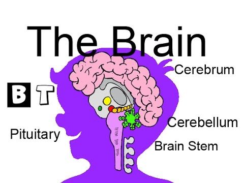 Learn about the Brain - school science for kids