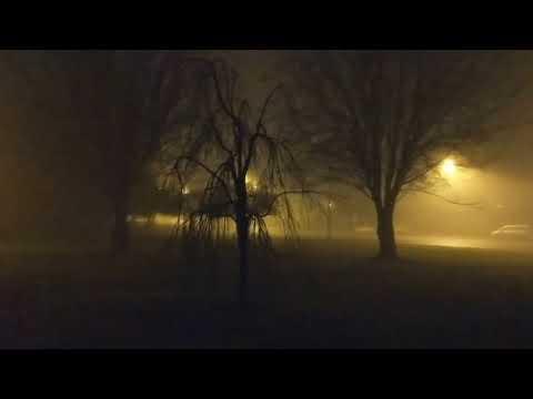 VLOG - Foggy Night 🌑 🌫🌙 |Vancouver B.C| Spooky Tree